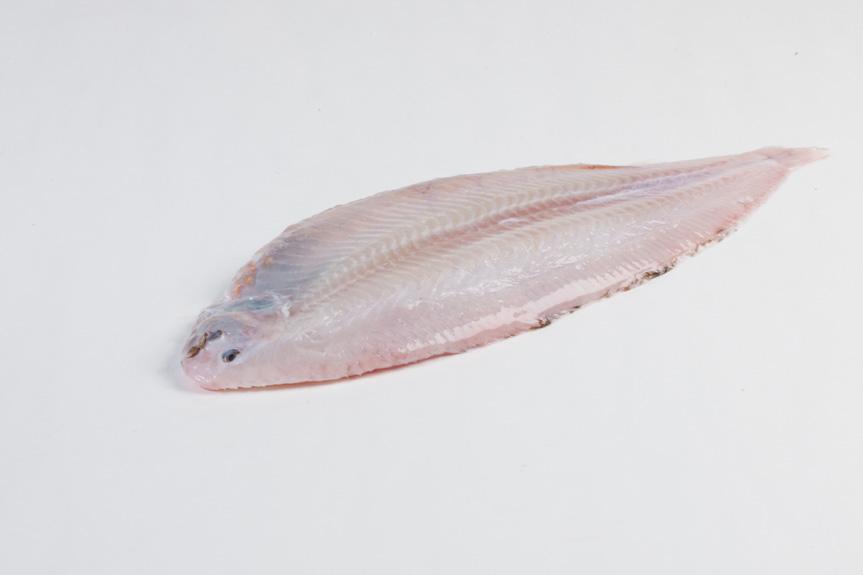 Groothandel-vis-FishXL-vis-tong_WL_9162