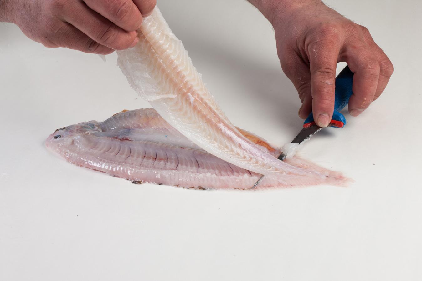Groothandel-vis-FishXL-vis-tong_WL_9167