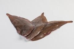 Groothandel-vis-FishXL-vis-tong_WL_9152