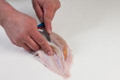 Groothandel-vis-FishXL-vis-tong_WL_9164