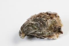 Groothandel-vis-FishXL-schelpdieren-umami-oesters_WL_9494