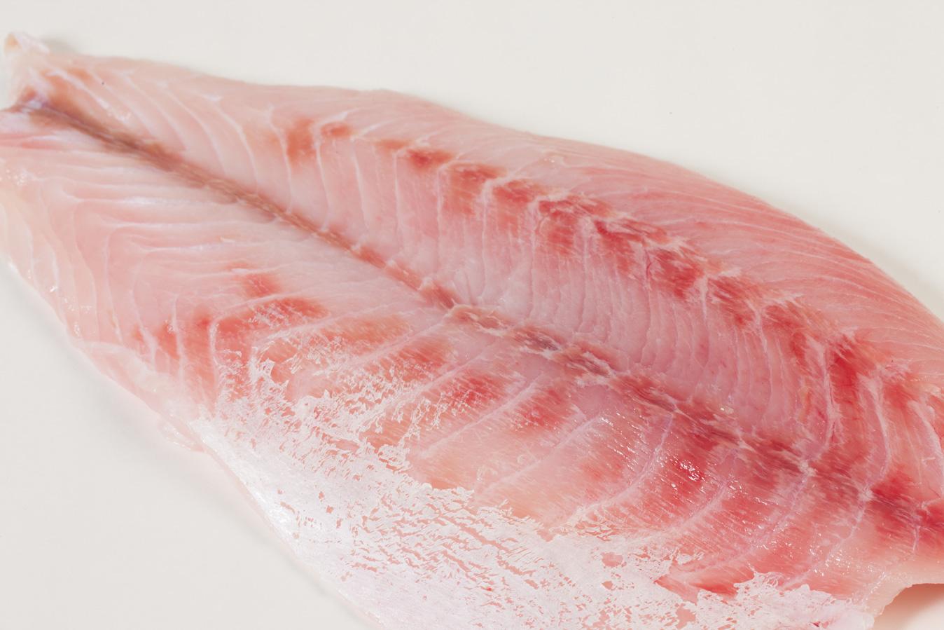 Groothandel-vis-FishXL-vis-victoriabaars_WL_9030