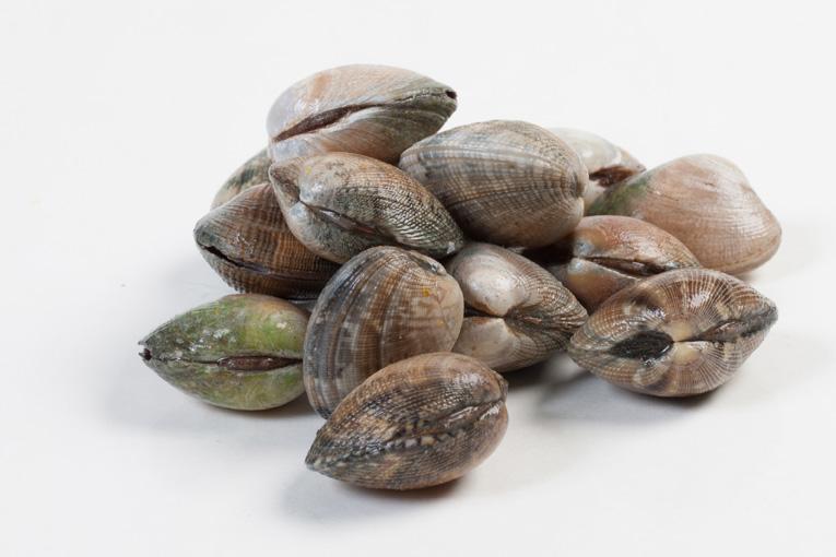 Groothandel-vis-FishXL-schelpdieren-vongole_WL_9458