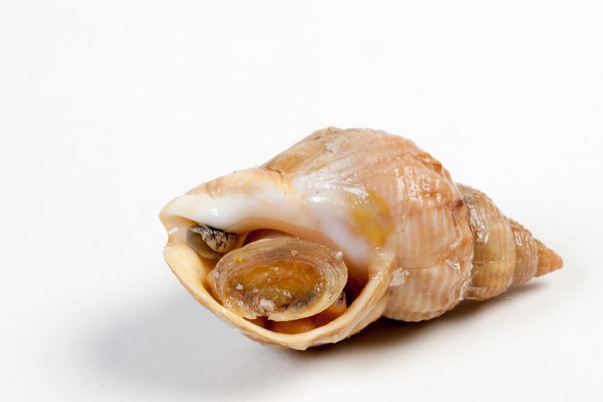 Groothandel-vis-FishXL-schelpdieren-wulken_WL_9484