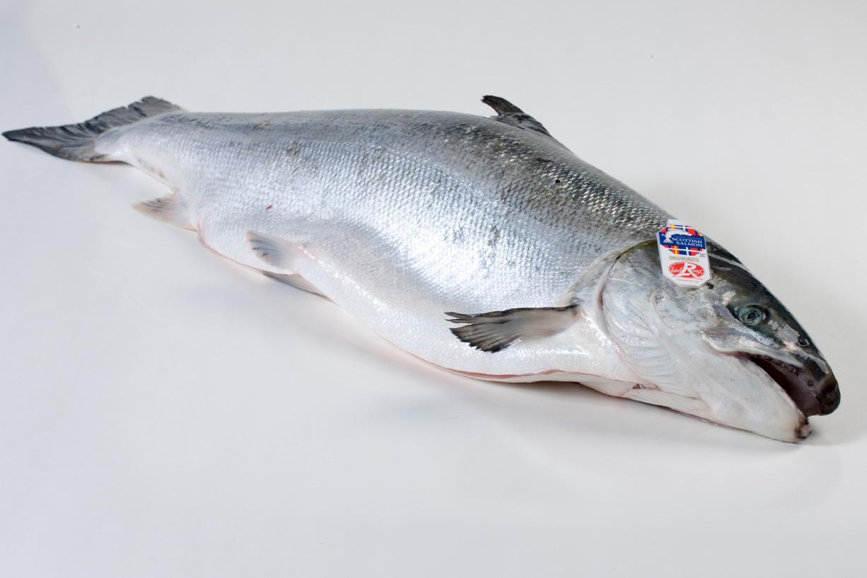 zalm vis