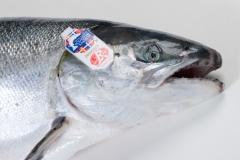 Groothandel-vis-FishXL-vis-schotse-zalm-label-rouge_WL_9033