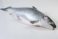 Groothandel-vis-FishXL-vis-schotse-zalm-label-rouge_WL_9034