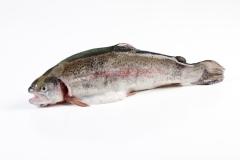 Groothandel-vis-FishXL-vis-zalmforel_WL_9048