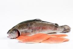 Groothandel-vis-FishXL-vis-zalmforel_WL_9050