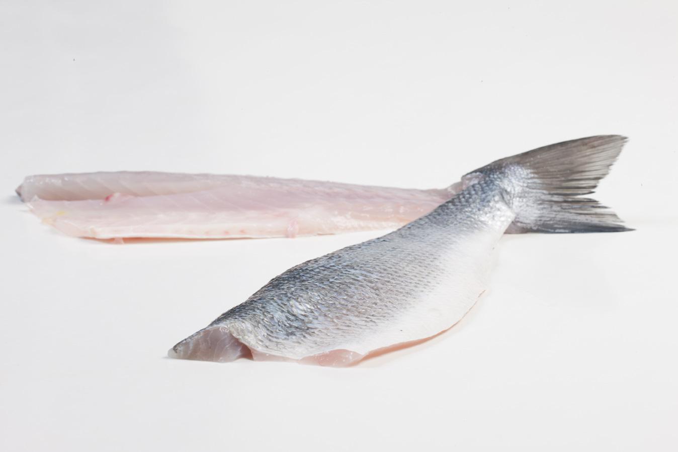Groothandel-vis-FishXL-vis-zeebaars_WL_9629