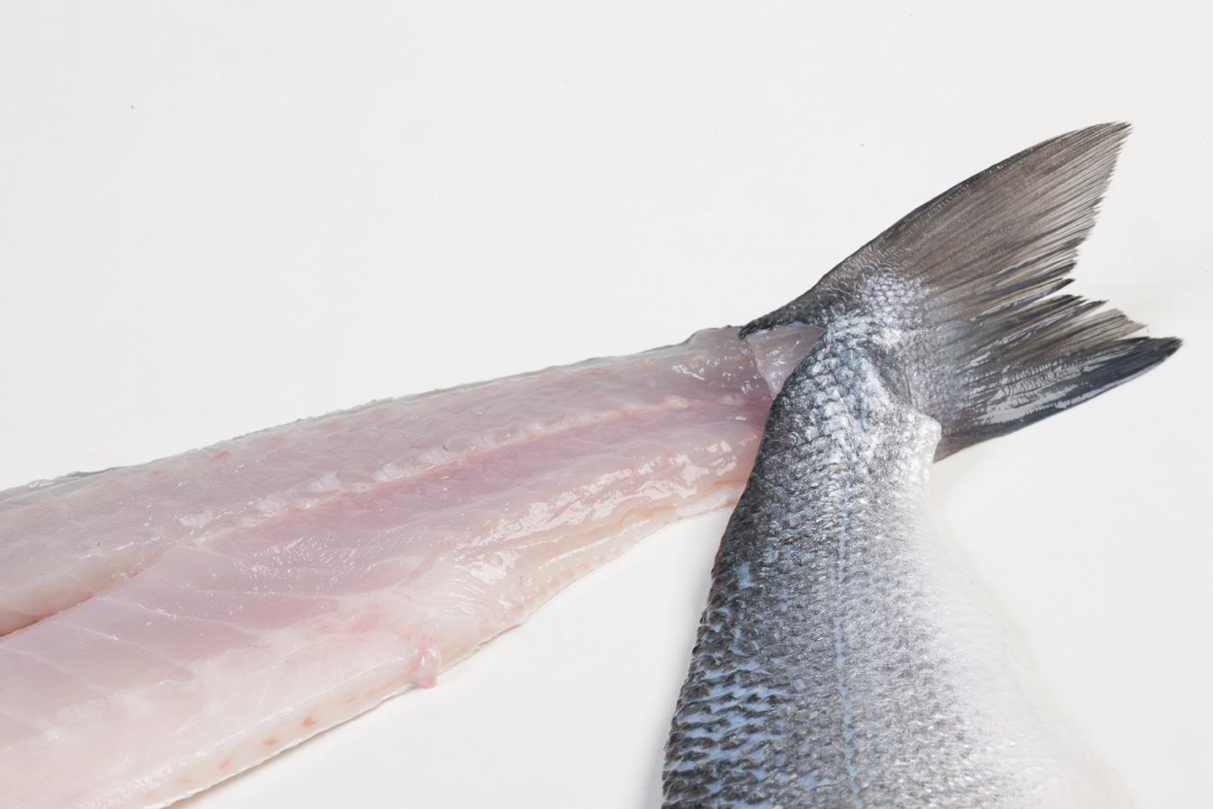 Groothandel-vis-FishXL-vis-zeebaars_WL_9630