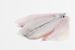 Groothandel-vis-FishXL-vis-zeebaars_WL_9621