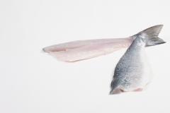 Groothandel-vis-FishXL-vis-zeebaars_WL_9628