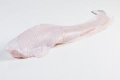 Groothandel-vis-FishXL-vis-zeewolf_WL_9103