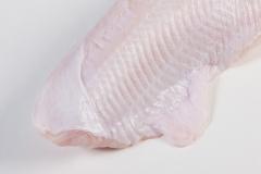 Groothandel-vis-FishXL-vis-zeewolf_WL_9105