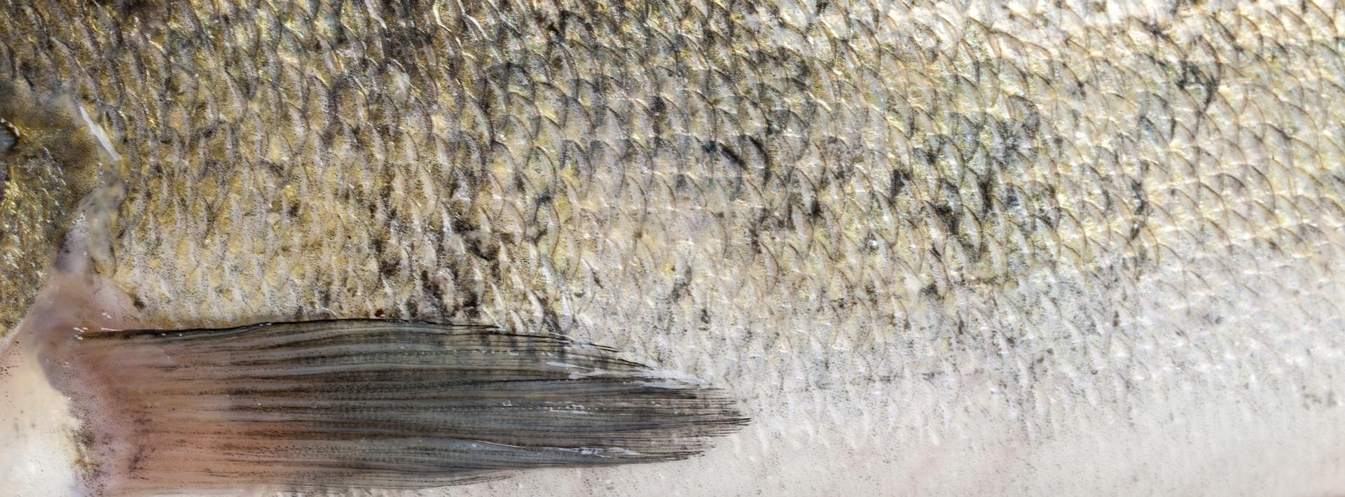 FishXL-in-Yerseke_WL_9299