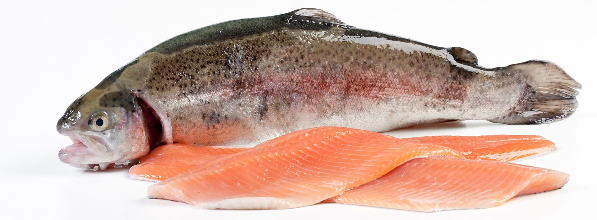 Fish XL
