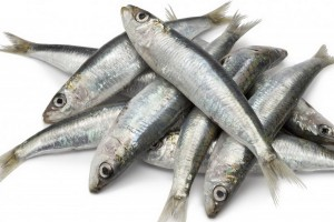 6TZGD_sardines