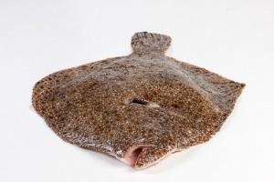 106019-2_Tarbot heel 300-500 gram